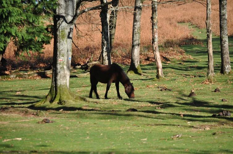 La Grande Traversée VTT du Pays basque - Sare à Hendaye