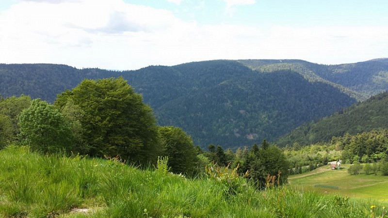 GR533 Sud-Nord en Haute-Saône - Vosges du sud