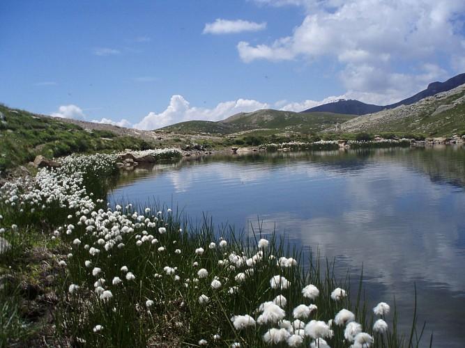 Aux environs du lac des Estaris