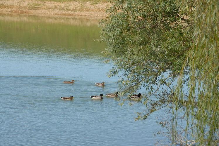 Lomagne PR5 - Circuit des lacs