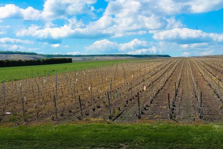 Voipreux, entre Vignes et Plaines Champenoises