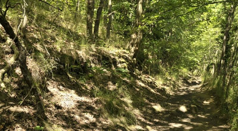 La voie Agrippa Chemin antique