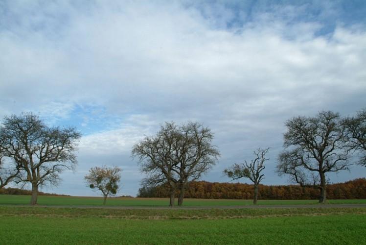 Circuit n°6: Pays d'Armance, à la découverte d'un village perché