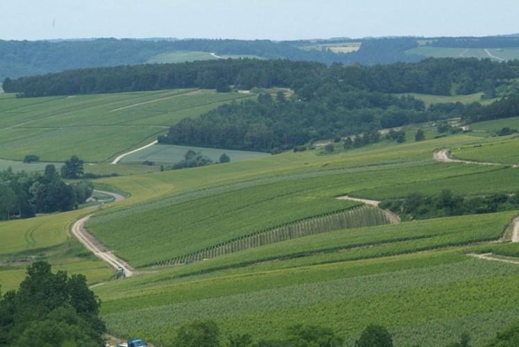 Circuit n°9: Sur la Route des Cisterciens