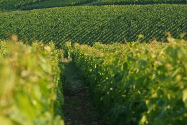Circuit n°10: Des coteaux du champagne aux sources de la Dhuys