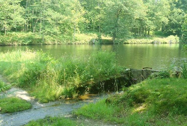 Chemin des étangs