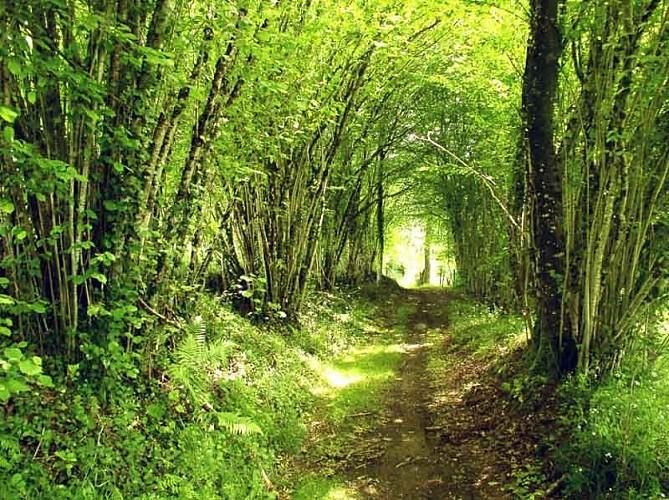 Circuit des mines d'or de la forêt de Champ Vert