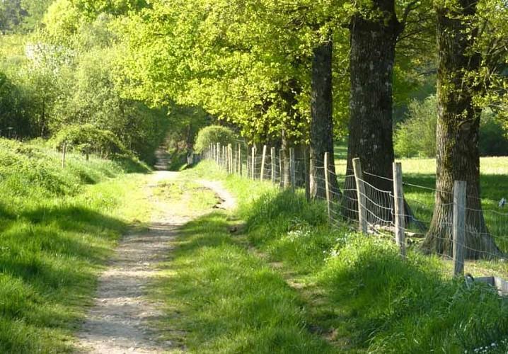 Forêt des Vaseix sentier la promenade de Chamberet