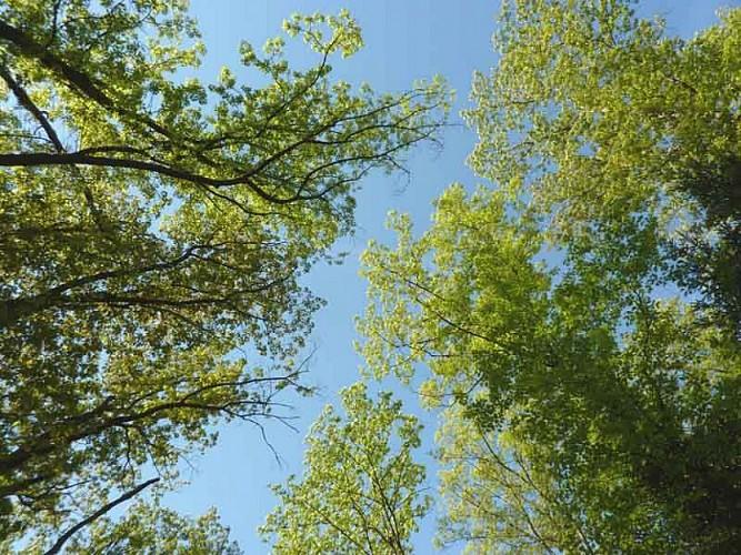 Forêt des Vaseix Sentier La promenade de l'étang