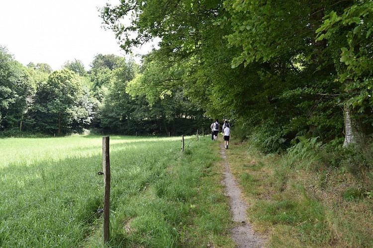 Sentier des étangs