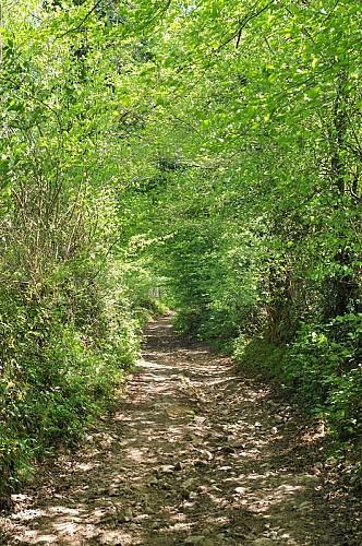 Sentier des forges et des moulins