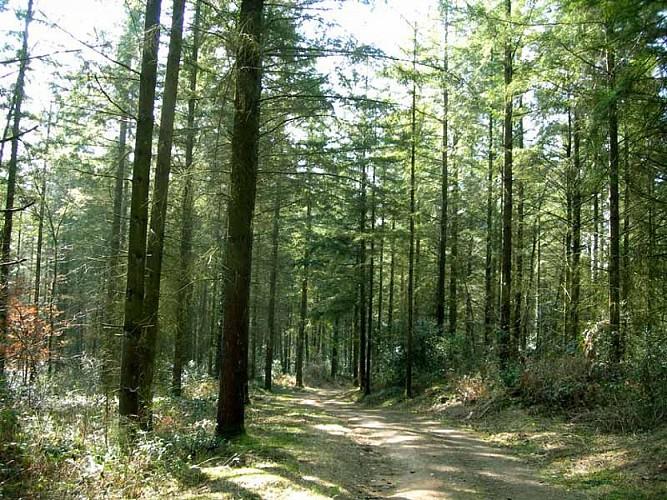 Sentier Douas Vias