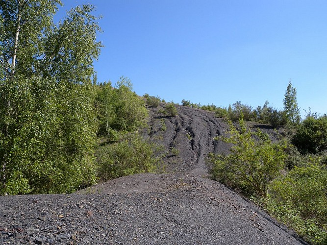 Trek : Endurance sur les pistes et pavés de Mons / Hainaut