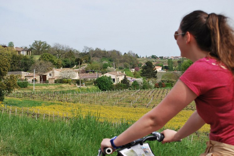 Organic wine tour & bicycle #1