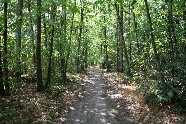Pincé/ Courtillers/ Sablé - Tour de la forêt de Pincé