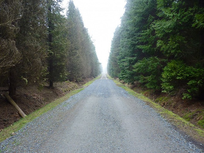 Saint-Hélen - En passant par la forêt de Coëtquen