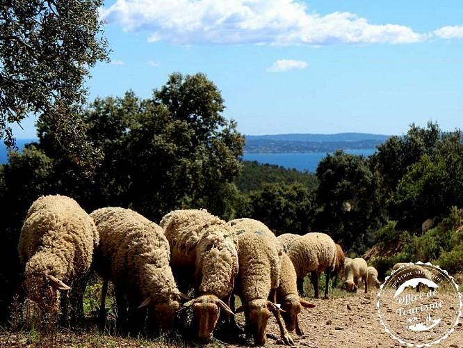 Le sentier de l'Agriotier - VALLON DE LA GAILLARDE LES ISSAMBRES