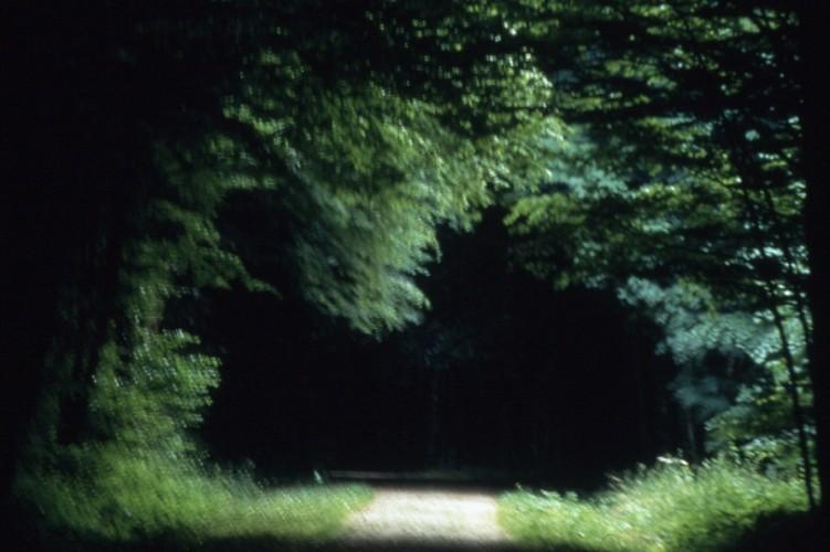 La Forêt de Larivour