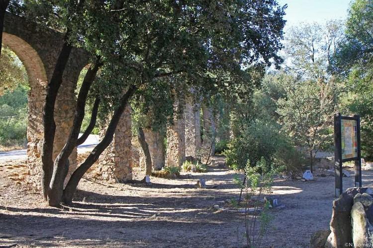 Mimosa tree trail - GAILLARDE VALLEY LES ISSAMBRES