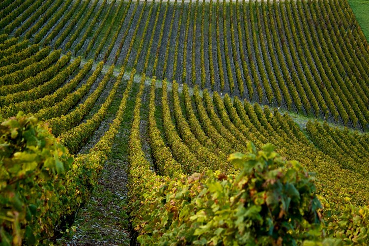 the way of the vineyards