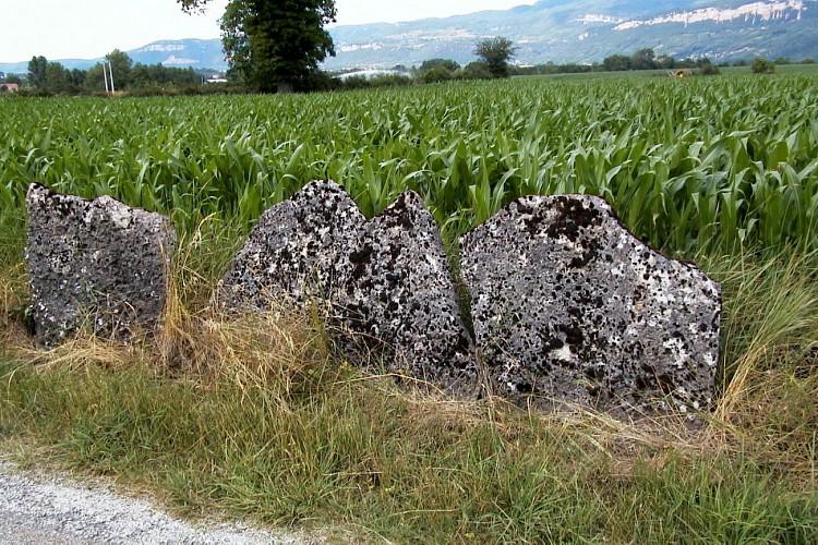 Pierres Plantes de la région Montalieu