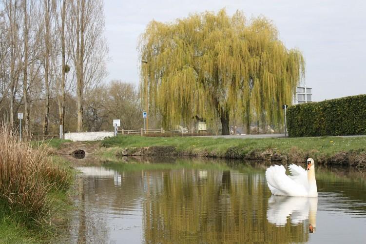 Champigné - Sentier de la Malle Demeure