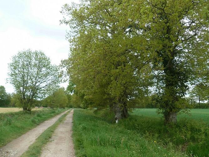 Vélo Promenade® en Pays de Rennes n°5