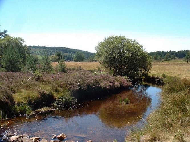 Le Plateau de Millevaches