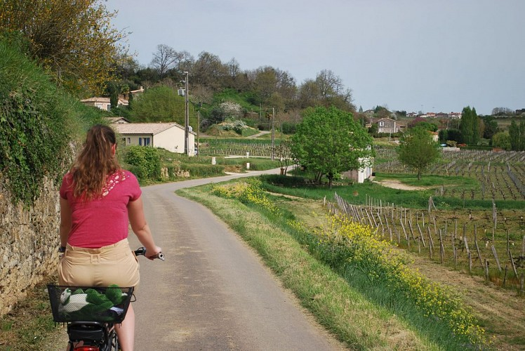 Bike and wine #3