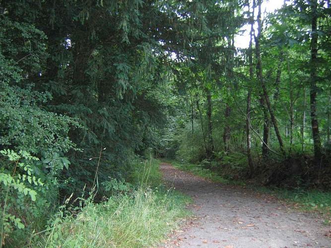Chavagne : Le Bois de la Sillandais
