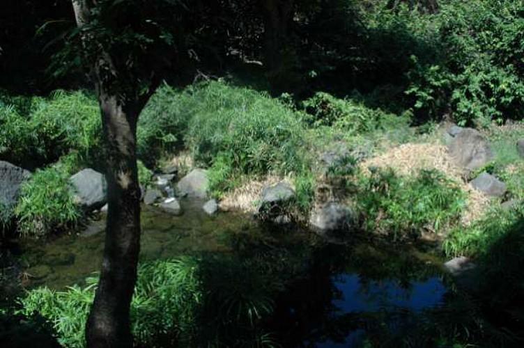 Bassin Long (Grande Fontaine)