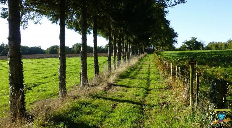 Chéronnac - Circuit de la tour Mirabeau - 14km - 3h45 - Haute-Vienne (87)
