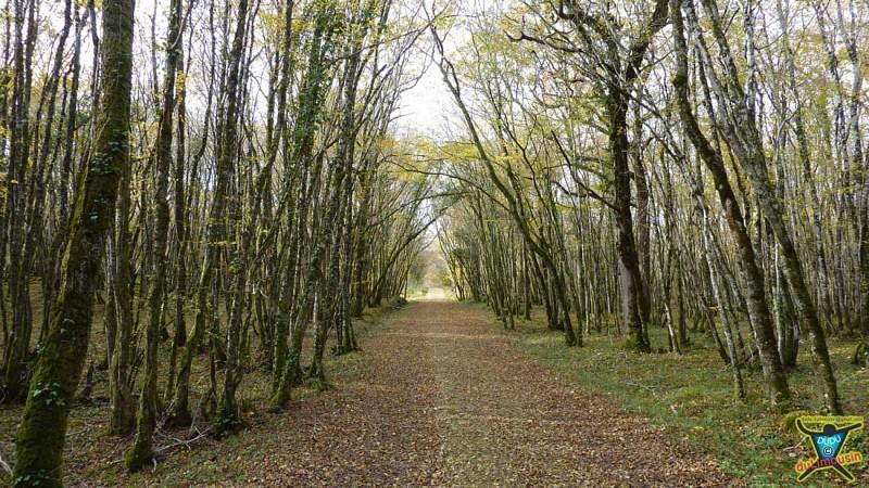 Lac du Causse - Les dolmens et la forêt de Couzage - 15 km - 4h00 - Corrèze (19)