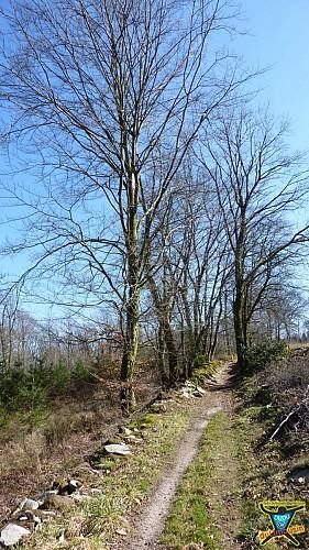 Montrol-Sénard - Sur les traces d'Henri IV - 13km - 3h30 - Haute-Vienne (87)