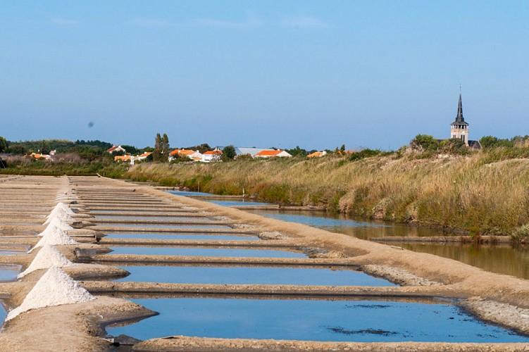 Le sentier du sel - L'Ile d'Olonne