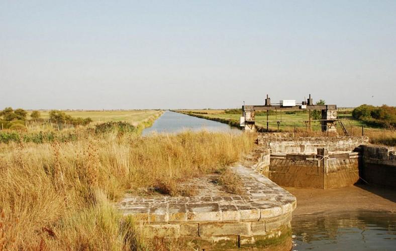 Un paysage du marais desséché