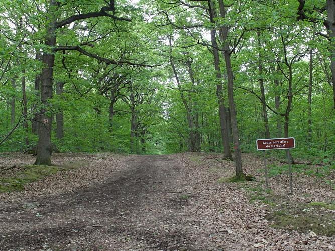 Tour de la Forêt de Verrières