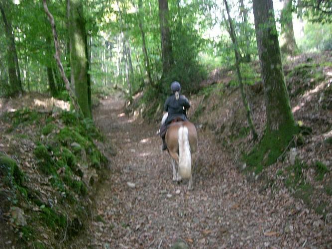 Balade autour de Saint-Nicolas des bois