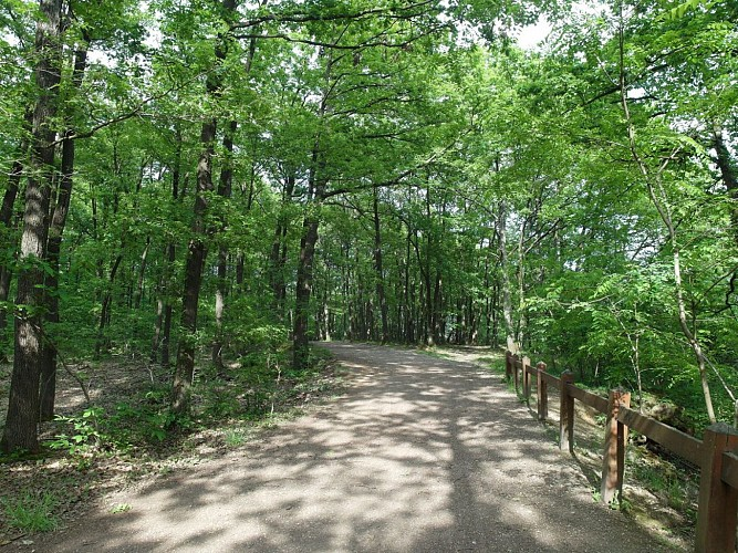 Sentier des Sittelles (forêt domaniale de Verrières)