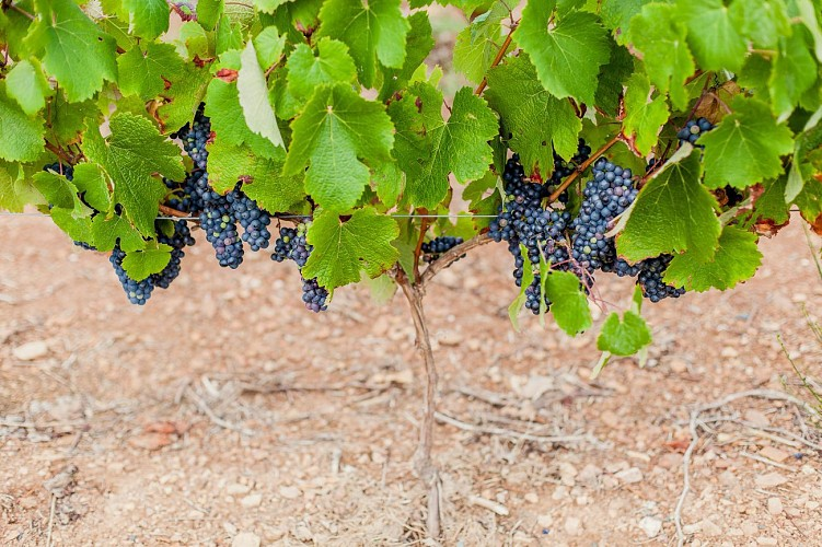 Les Vignes et la Vallée de l'Yon - N°15