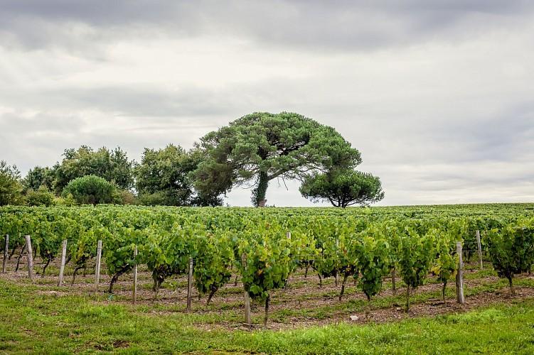 Du Marais à la Vigne