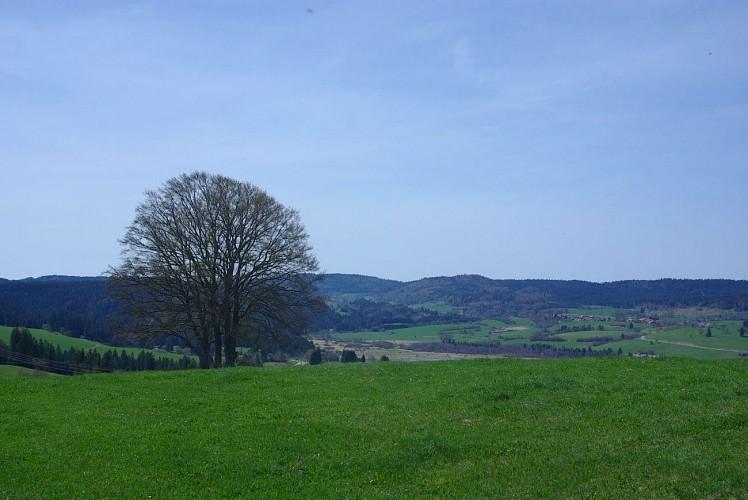 Paysage du Haut-Doubs
