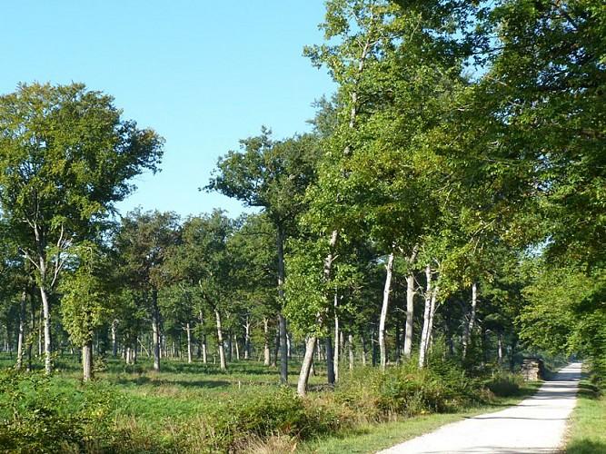 Chemin de l'Arboretum