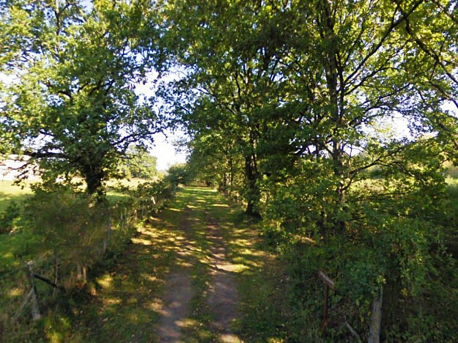 Bois autour de Sully-la-Chapelle