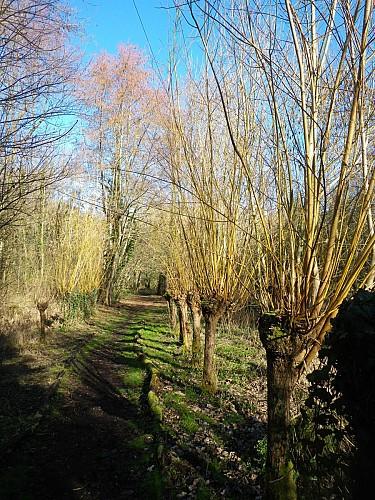 Meung sur Loire  : Parc naturel départemental des courtils des Mauves