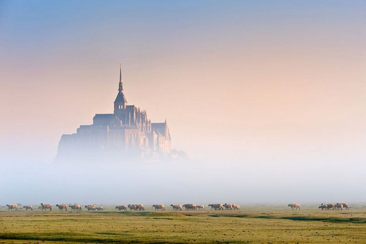 2013_baie_du_Mont_Saint_Michel_moutons_5975%C2%A9M_Lerouge_CDT50 [800x600]