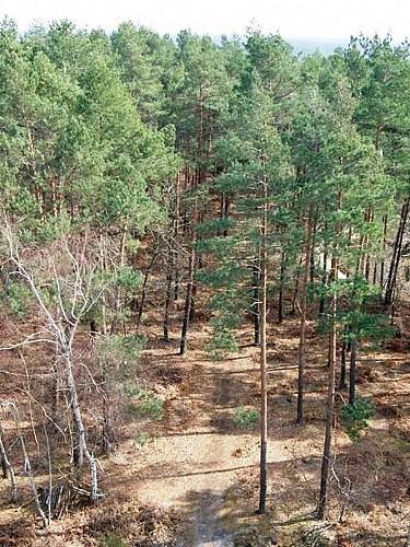 Sentier des Bois Bézard
