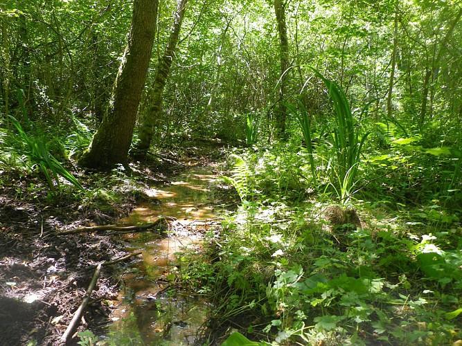 Briare : Parc naturel départemental de Trousse bois