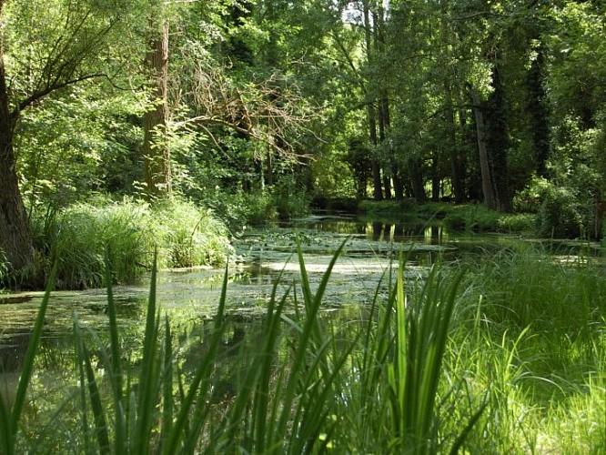 Rivière Essonne