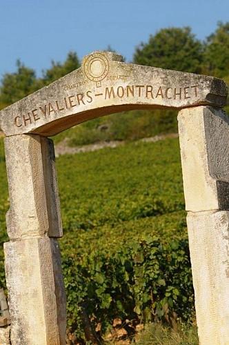Le célèbre vignoble du Montrachet
